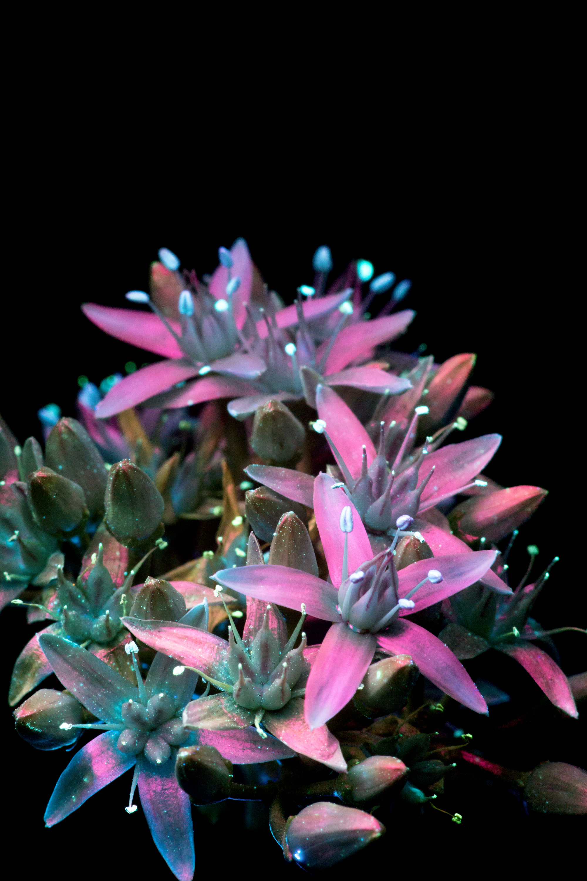 New-Succulent-Flower-5